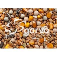 Garvo Rui Rust 20 kg